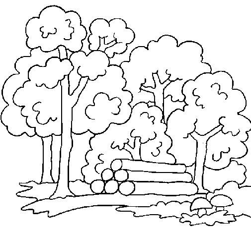 Disegno di bosco da colorare for Immagine di un disegno di architetto
