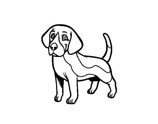 Disegno di cane beagle da colorare for Disegni da stampare e colorare di cani
