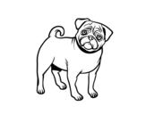 Disegno di Cane carlino da colorare