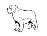 Disegno di Cane di San Bernardo da colorare