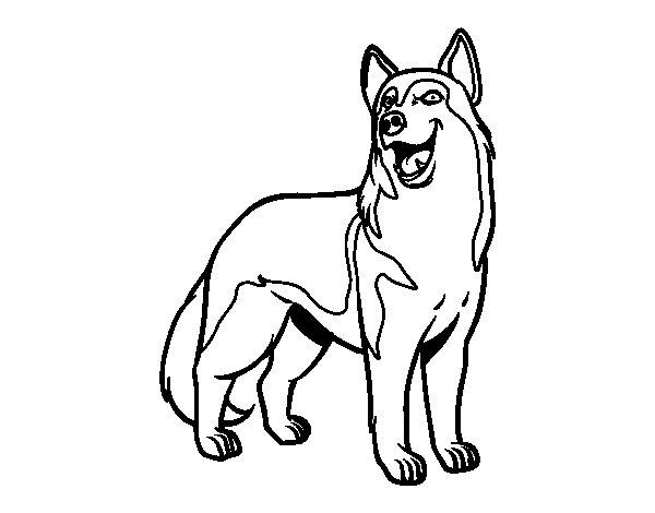disegni da colorare cane lupo
