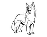 Disegno di Cane lupo da colorare