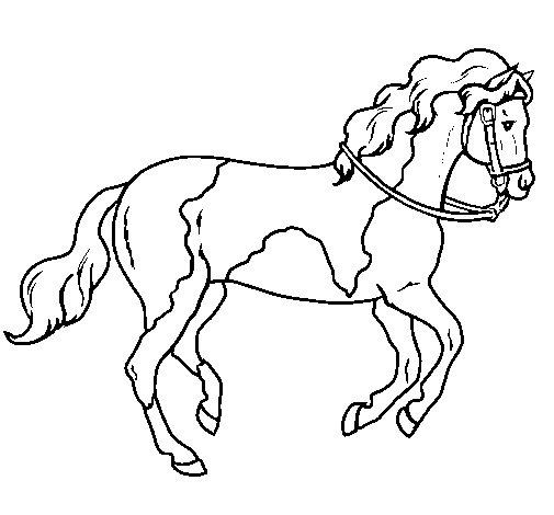 Molto Disegno di Cavallo 5 da Colorare - Acolore.com WJ63