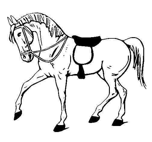Disegno Di Cavallo Da Competizione Da Colorare