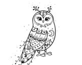 Disegno di Civetta di inverno da colorare