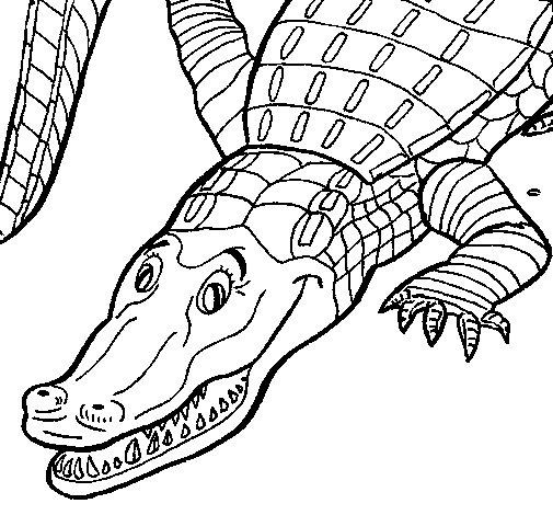 Disegno di coccodrillo da colorare for Coccodrillo da colorare