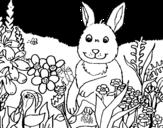 Disegno di Coniglio in campagna da colorare