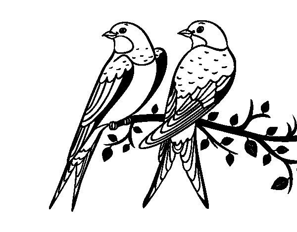 Amato Disegno di Coppia di uccelli da Colorare - Acolore.com ES02