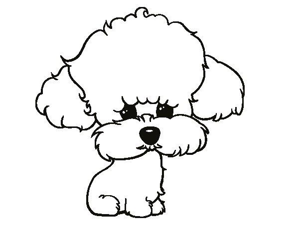 Disegno di cucciolo di poodle da colorare - Cucciolo da colorare stampabili ...