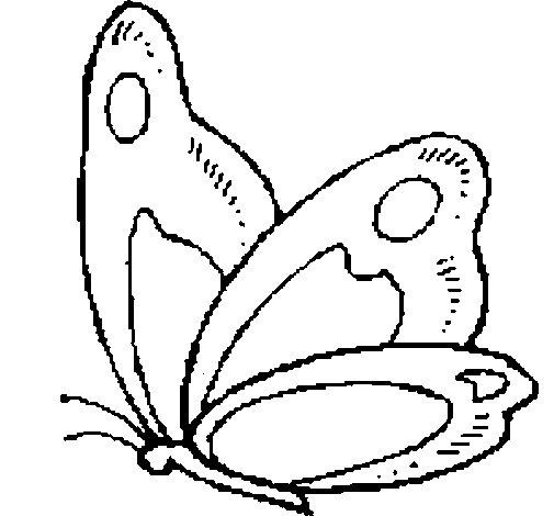 disegni da colorare di farfalla