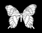 Disegno di Farfalla selvatico da colorare