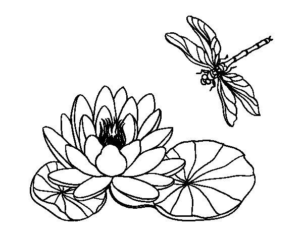 Disegno Di Rosa Con Foglie Da Colorare Acolore Com: Disegno Di Fiore Di Loto Da Colorare