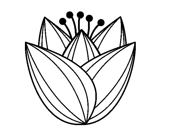 Disegno Di Rosa Con Foglie Da Colorare Acolore Com: Disegno Di Fiore Di Tulipano Da Colorare