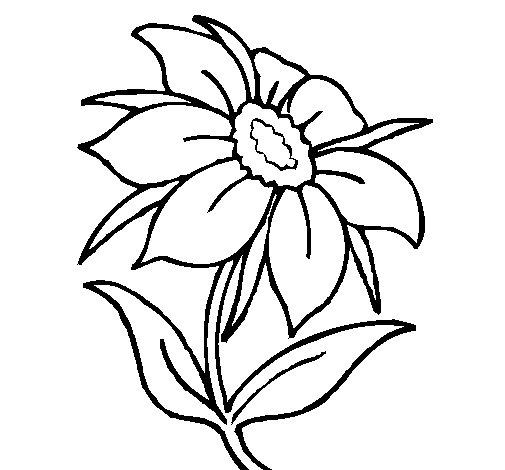 disegni da colorare di un fiore