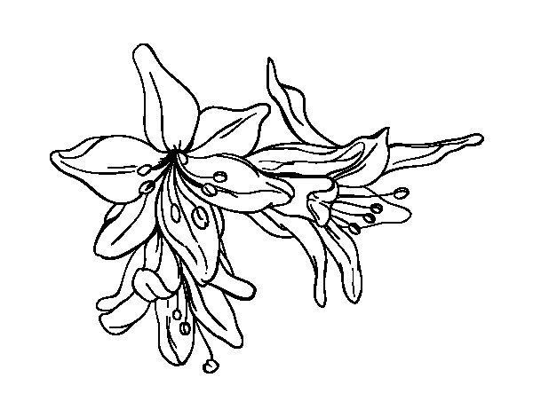 Disegno Di Rosa Con Foglie Da Colorare Acolore Com: Disegno Di Fiori Di Giglio Da Colorare