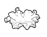 Disegno di Fungo kikurage da colorare