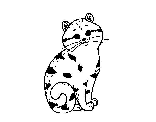 Disegno di Gattino bellisimo da Colorare