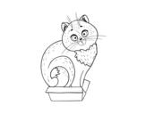 Disegno di Gattino in una scatola da colorare