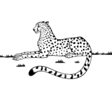 Disegno di Ghepardo riposo da colorare