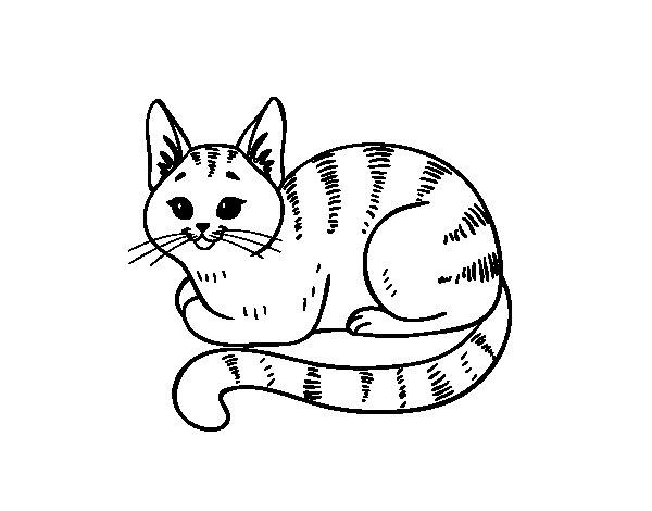 Disegno di giovane gatto da colorare - Gatto disegno modello di gatto ...