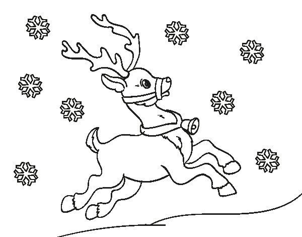 Disegno di Natale Renna da Colorare