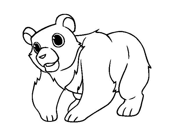 Disegno di Orso di montagna da Colorare