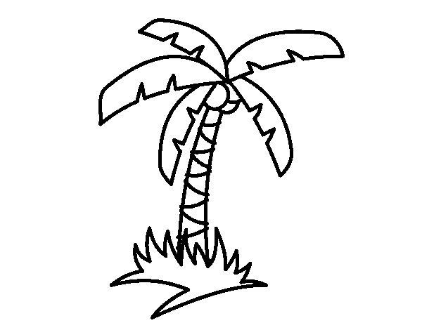 Disegno di palma tropicale da colorare for Disegni di scantinati di sciopero