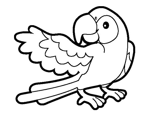 Dibujos Para Colorear De Animales De La Jungla Selva ...