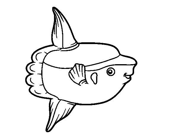 Disegno di Pesce luna da Colorare