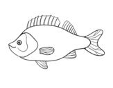 Disegno di Pesce persico da colorare