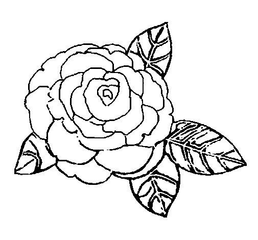 Disegno di Rosa da Colorare