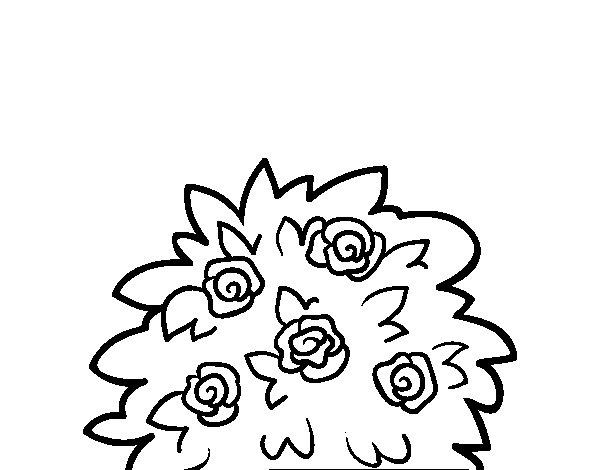 Disegno di Rosa canina da Colorare