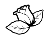 Disegno di Rosa con foglie da colorare