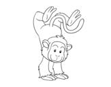Disegno di Scimmia equilibrista da colorare