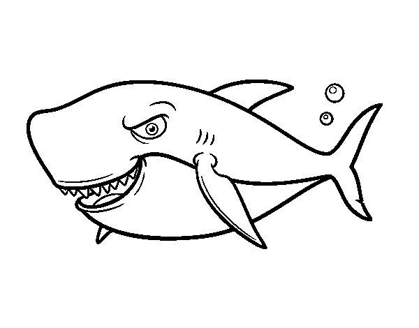Disegno di squalo dai denti grandi da colorare for Disegno squalo