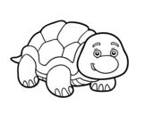 Disegno di Tartaruga de terra da colorare