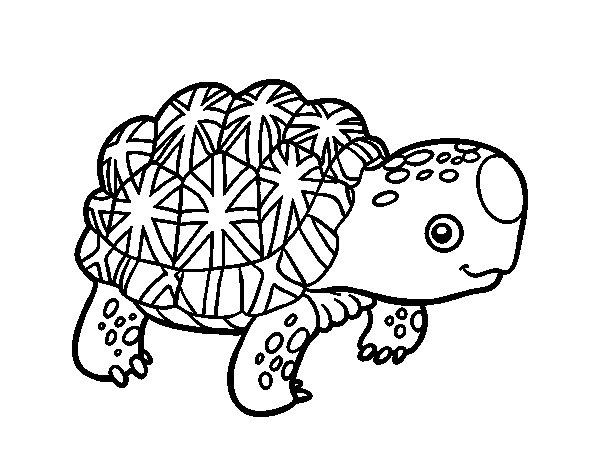 Disegno di Tartaruga stellata indiana da Colorare