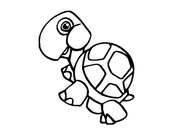 Disegno di Tartaruga terrestri da Colorare