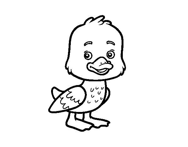 Disegno di Un anatroccolo da Colorare