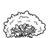 Disegno di Un arbusto da colorare