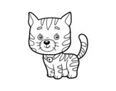 Disegno di Un gatto domestico da colorare