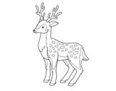 Disegno di Un giovane cervo da colorare