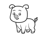 Disegno di Un porcellino da colorare