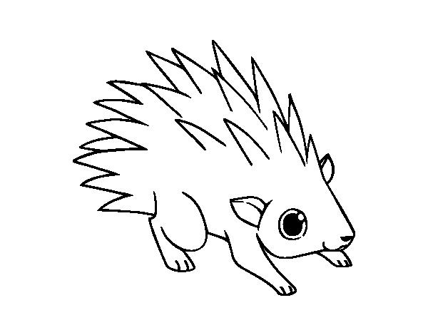 Disegno di un riccio da colorare for Riccio da colorare