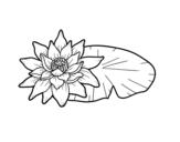 Disegno di Una fiore di loto da colorare