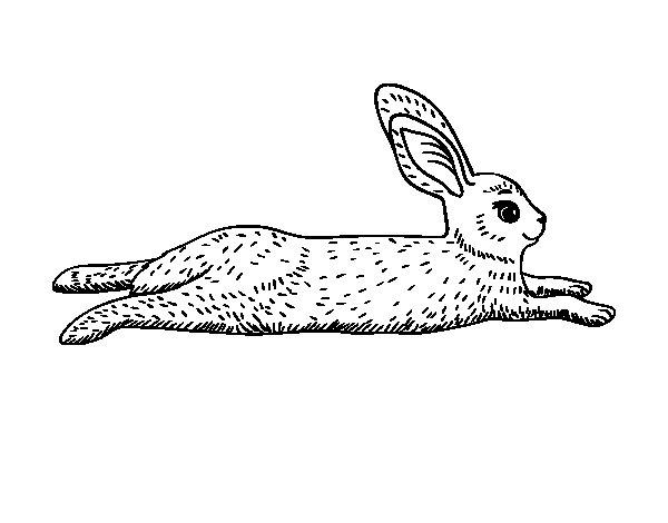 Disegno di Una lepre da Colorare