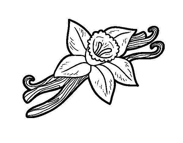 Disegno di Vaniglia da Colorare