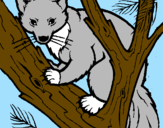 Disegno Martora europea su un albero  pitturato su mauro martina