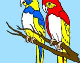Disegno Pappagalli  pitturato su papagali