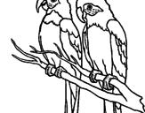Disegno Pappagalli  pitturato su Andrea